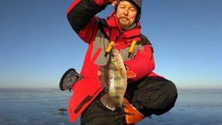 Хорошенькие окуни на балансир Рыбалка на водохранилище в декабре
