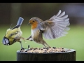 🐔 Funny Birds Compilation 🐦