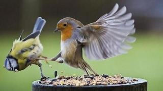 🐔 Funny Birds Compilation 🐦