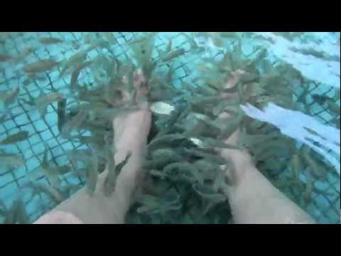 Fish Spa Manila Ocean Park - Manila Tour - WOW Philippines Travel Agency