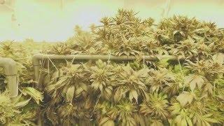 Marijuana Mania Episode 2 - When Big Business Meets Culture