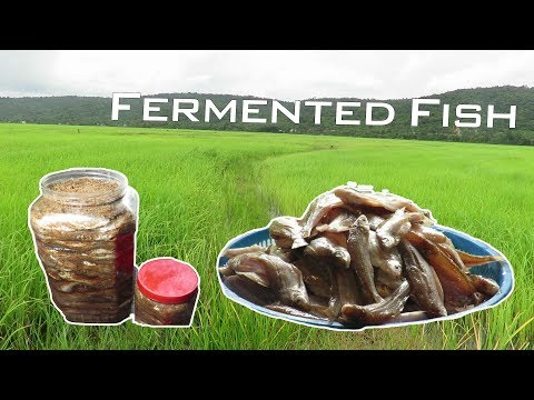 Making Yummy Fermented Fish By Rural Lady   Rural Lifestyle
