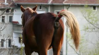 Brown horse make surprise