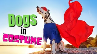 When Humans Dress Dogs - Funny Compilation Video