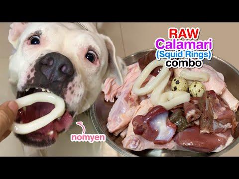 nomyen-the-pit-bull-1st-time-eats-🦑calamari&duck-combo-[asmr]-raw- -mukbang-犬が生の肉を食べる- -개는-날-음식을-먹는다