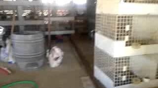 criadero jr españa sevilla(622037473)