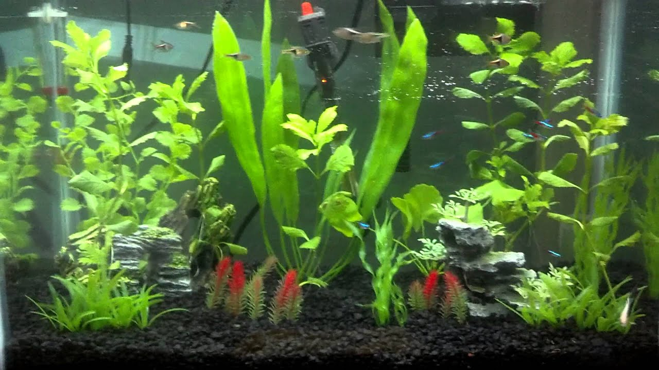 how to change aquarium gravel