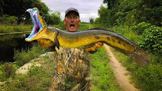 SnakeHead {Catch Clean Cook} This Fish is VICIOUS!!!