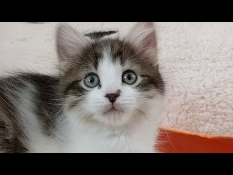Close Up Kittens 2017-04-24