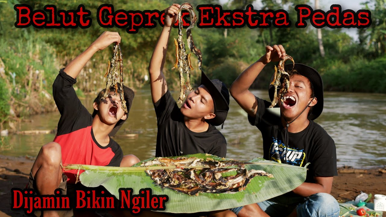 Panen Belut Besar di Sungai Langsung dimasak Belut Geprek