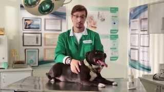 Vetoquinol - Чистка ушей у кошек и собак