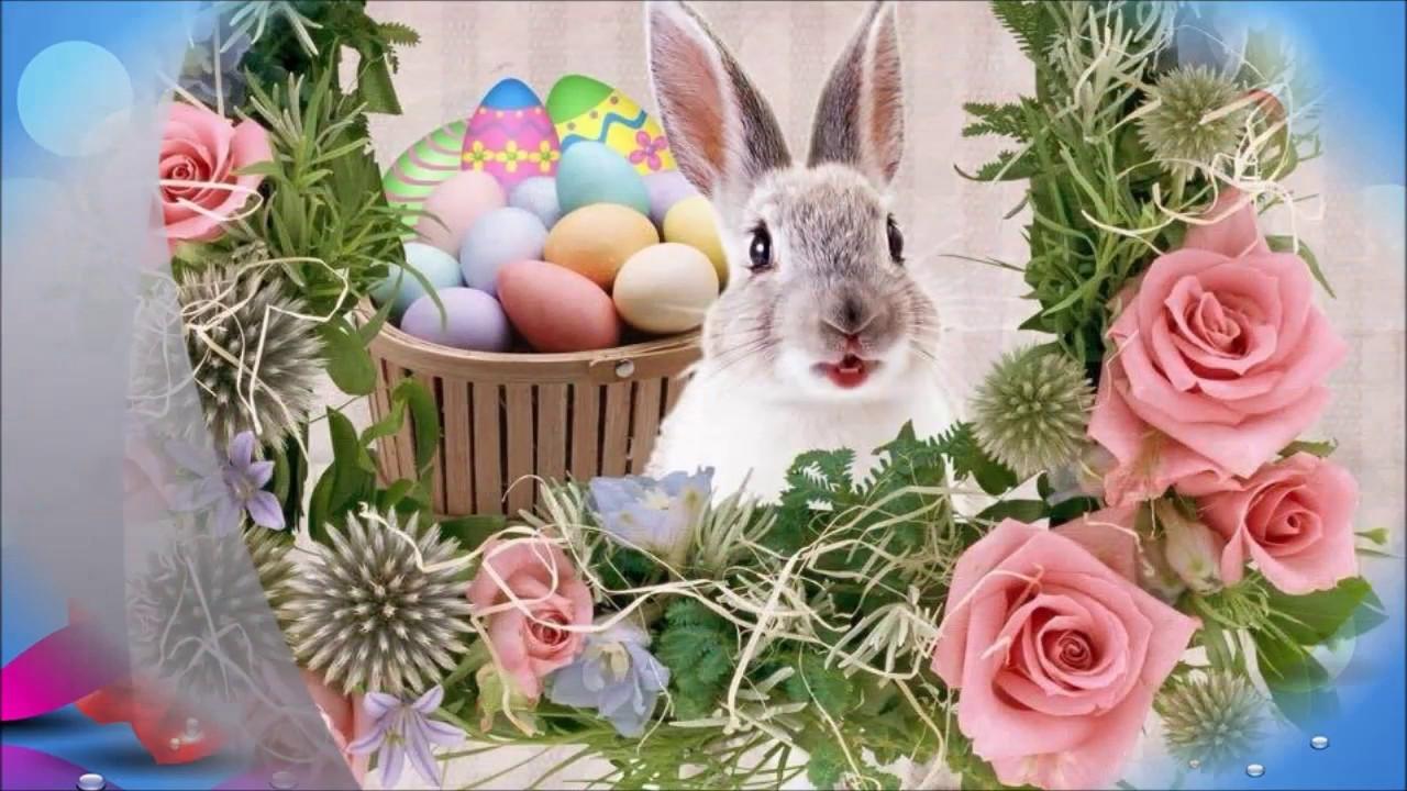 поздравления с праздником от зайцев крупного рогатого