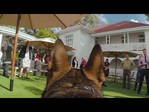 Gavel Cam - Gavel the friendly police dog's view of Fernberg, Queensland Government House