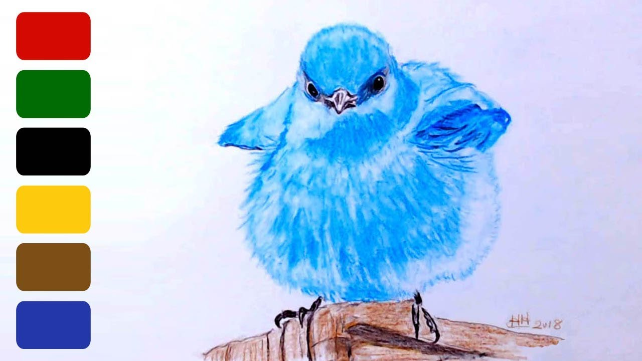 How To Draw A Realistic Bird Baby Mountain Bluebird