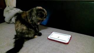 Фильмы для кошек (Релакс для Муси) 3