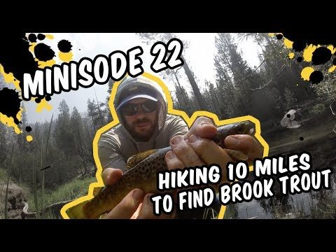 Minisode 22 – Hiking 10 Miles To Find Brook Trout (YOSEMITE FISHING)