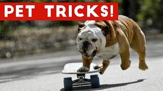 Funniest Animal Tricks of 2017 Compilation | Funny Pet Videos