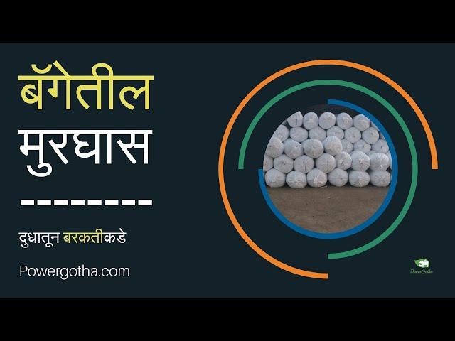 bag Murghas nirmiti, Silage making by Shailesh Rachkar with Dr. Shailesh Madane