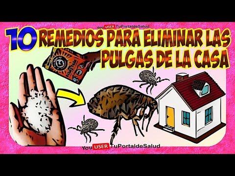 Como eliminar las pulgas de casa 10 remedios para - Matar pulgas en casa ...