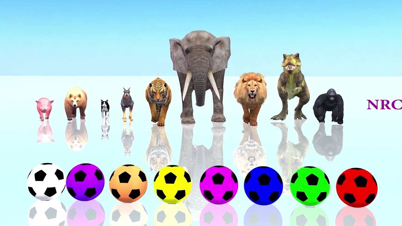 Learn Animals Playing With Soccer Balls For Kids - Wild And Domestic Animals Learning Videos