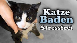 Wie bade ich meine Katze? (Stressfrei)