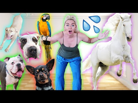 I GAVE ALL MY PETS A BATH!