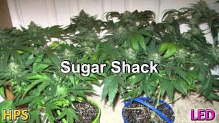 LED Grow Light 205W Penetrator vs 400W HPS Medical Marijuana Grow.mpg