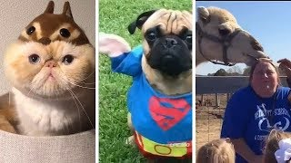 Animals never Fail to make us Laught   The Amazing funny animals Complication 2019