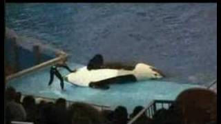Seaworld gone wrong