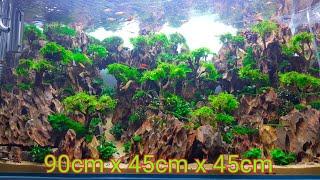 Quá trình làm hồ thủy sinh - hồ 90cm x 45cm x 45cm