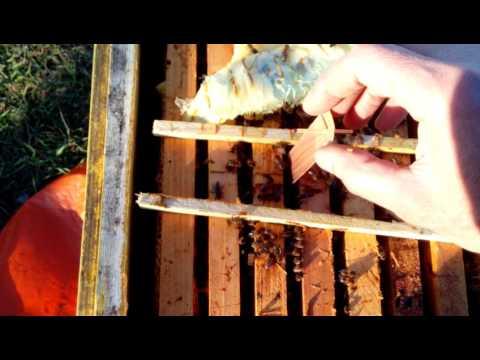 Весенняя обработка пчел от клеща