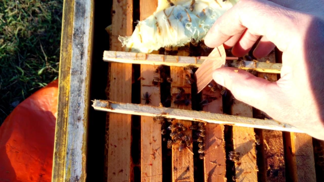 Весенняя обработка пчел и ульев
