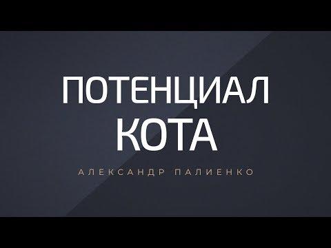 Потенциал кота. Александр Палиенко.