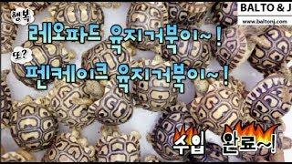 레오파드 육지거북 & 펜케이크 육지거북이 & 잭슨 카멜…