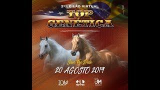 2° LEILÃO VIRTUAL TOP ID GENÉTICA