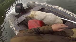 Рыбалка Перетяга Рыба пошла