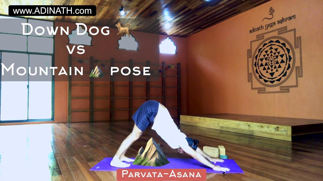 Downward Facing Dog Vs Mountain Pose