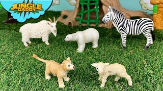 """Learn Animals according to Color!! """"Jungle Daddy"""" schleich safari ltd toys figures wild life zoo"""