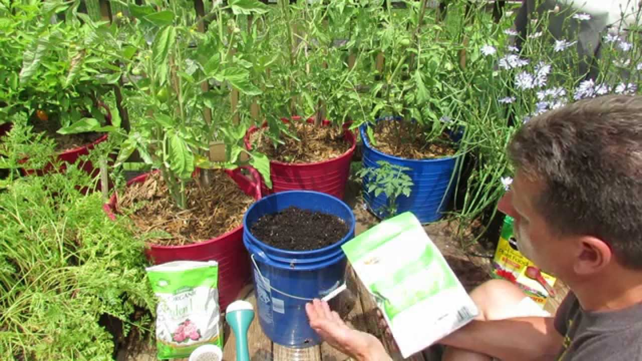 Principles For Growing Container Tomatoes Soil Planting Fertilizer Watering Side Dressing You