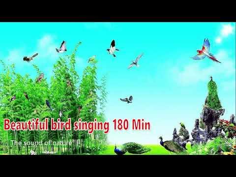 Beautiful bird singing 180 Minutes  Bird Songs  Nature Sound  003