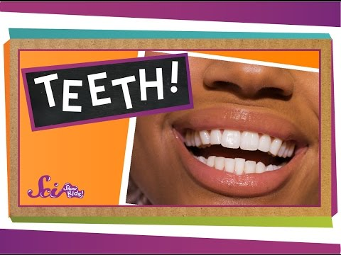 Teeth: Not Just for Smiles!