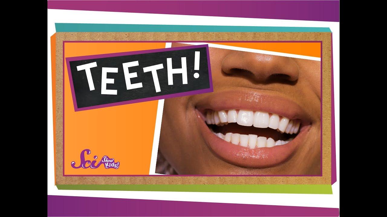 teeth and dental care for ks1 and ks2 children teeth and dental care homework help theschoolrun [ 1280 x 720 Pixel ]