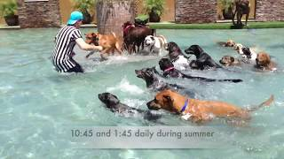 SHORT VERSION of our lobby video: Big dog boarding & daycare at the splash park at Always Unleashed