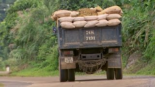Harvesting the Coffee Farms - This World: The Coffee Trail With Simon Reeve - BBC