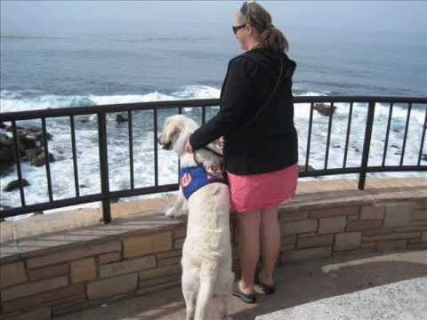 service-dog-windsor-peace-in-at-the-beach.wmv