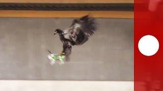 """بالفيديو.. الشرطة الهولندية تستخدم النسور لمكافحة التهريب عبر طائرات """"درون""""!"""