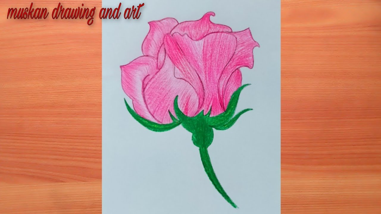 How to rose with color pencil for beginners   