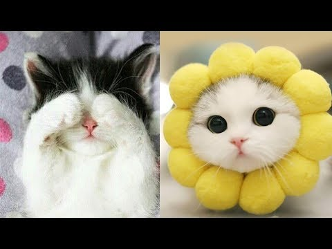 Best Moment of Cats August 😍 Cute Cats Video 2019
