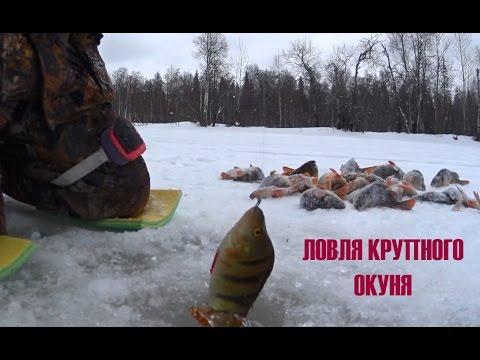 видео: Ловля крупного окуня! Удачно попали!