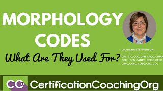 Morphology Codes — What Are They Used For?